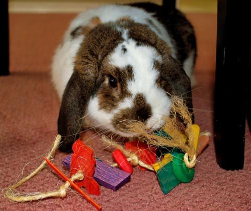 Comment choisir les jouets de notre lapin de compagnie ?