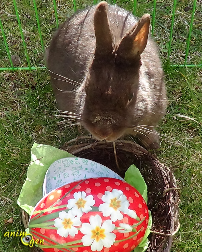 Le lapin de Pâques (origines et symbolique)