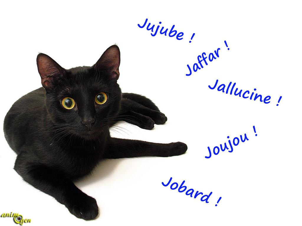 Trouver un nom pour nos chats en 2014, l'année des J (liste)