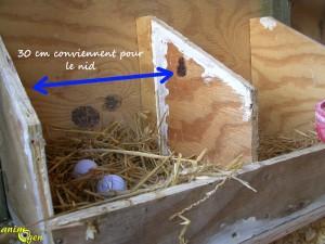 Poulailler : sol, perchoirs, nids, litière, que choisir ?