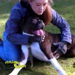 Comment pratiquer le massage cardiaque canin, ou PCR (vidéo pouvant heurter les âmes sensibles)
