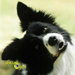 La capacité d'obéir aux ordres des chiens est-elle dictée par la race ?