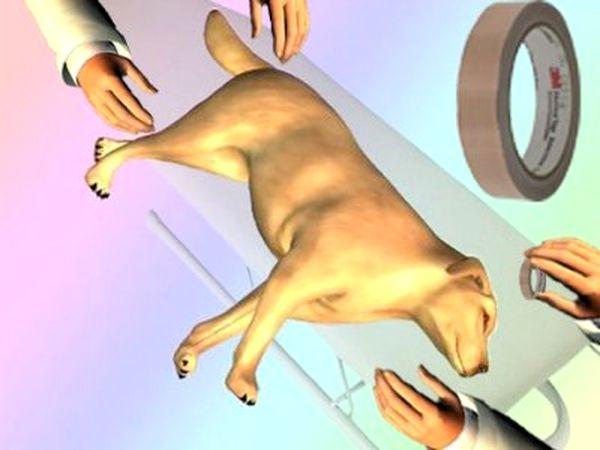 Santé : les premiers soins à administrer à un chien lors d'un choc à la tête