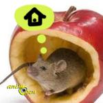 Accessoire : comment choisir la cage d'une souris ?