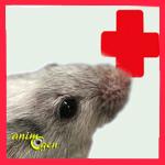 Santé : les maladies les plus courantes des souris de compagnie (causes, symptômes, solutions)