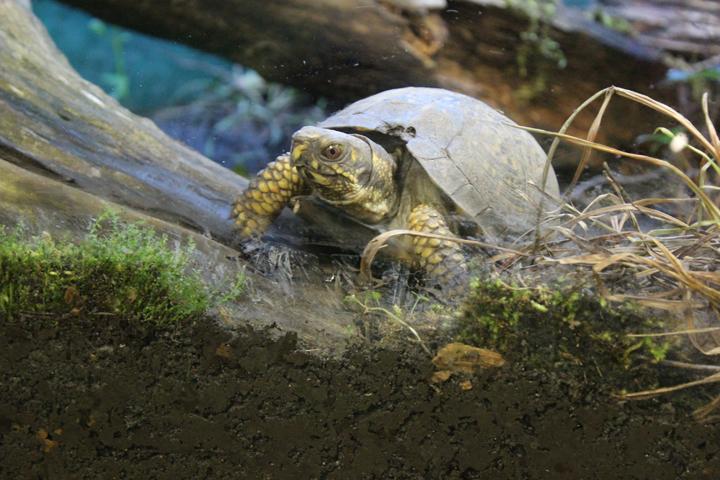 Quel type de substrat utiliser dans le terrarium d'une tortue terrestre ?