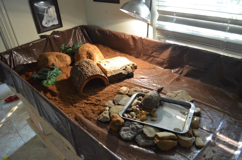 quel type de substrat utiliser dans le terrarium d une tortue de terre animogen