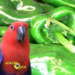 La carence en vitamine A chez les perroquets : symptômes et solutions