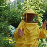 AnimOgen au royaume des abeilles : à la découverte de l'apiculture