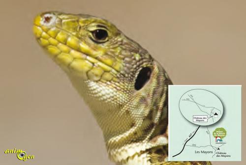 Exposition sur les reptiles du Var aux Mayons (83), du mercredi 02 avril au jeudi 29 juin 2014