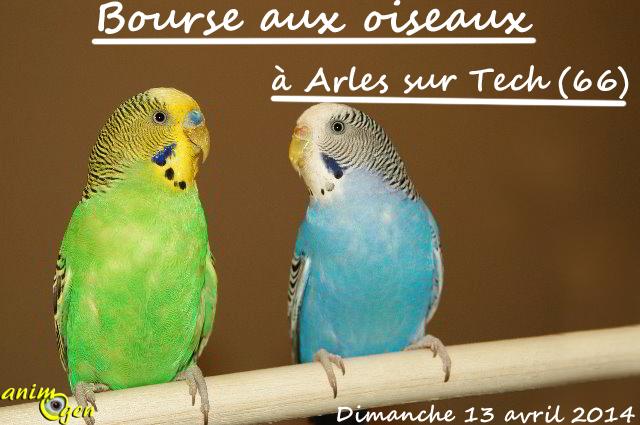 Bourse aux oiseaux d'Arles sur Tech (66), le dimanche 13 avril 2014