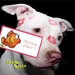 Avec le PetTouch, gardez physiquement le contact à distance avec vos chiens et chats