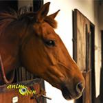 Le confinement, un problème de taille pour les chevaux