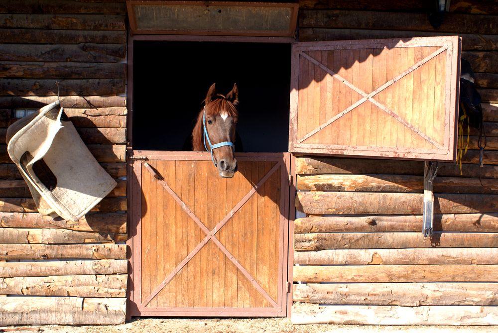 Le confinement un probl me de taille pour les chevaux animogen - Porte de box pour chevaux a vendre ...