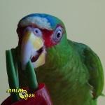 Le cornet-frites, une pause-déjeuner diététique et ludique pour nos perroquets