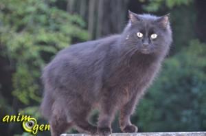 Santé : pourquoi les poils de certains chats noirs ont-ils des reflets bruns ou rougeoyants ?