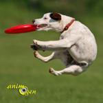 Santé : à quelle intensité d'exercice quotidien devons-nous soumettre nos chiens ?
