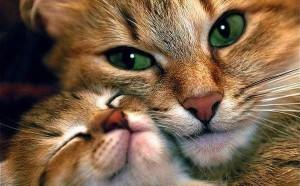 Comportement : le rapport à la famille et au couple dans les rapports entre chats