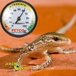 L'impact des variations d'humidité et de température sur la santé des reptiles