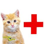 Santé : l'insuffisance pancréatique exocrine chez le chat (causes, symptômes, traitement)