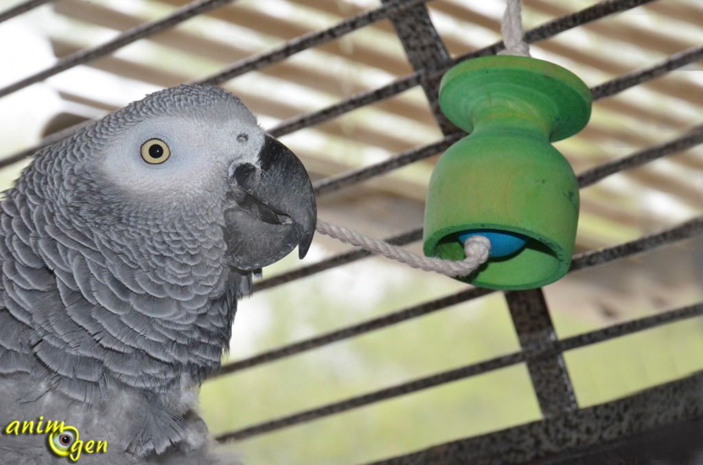 Jouet : comment fabriquer une cloche pour nos perroquets ?