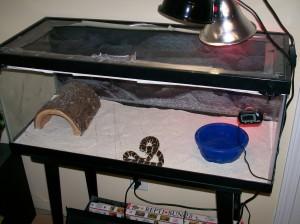 Serpent roi de Californie : éclairage et chauffage du terrarium