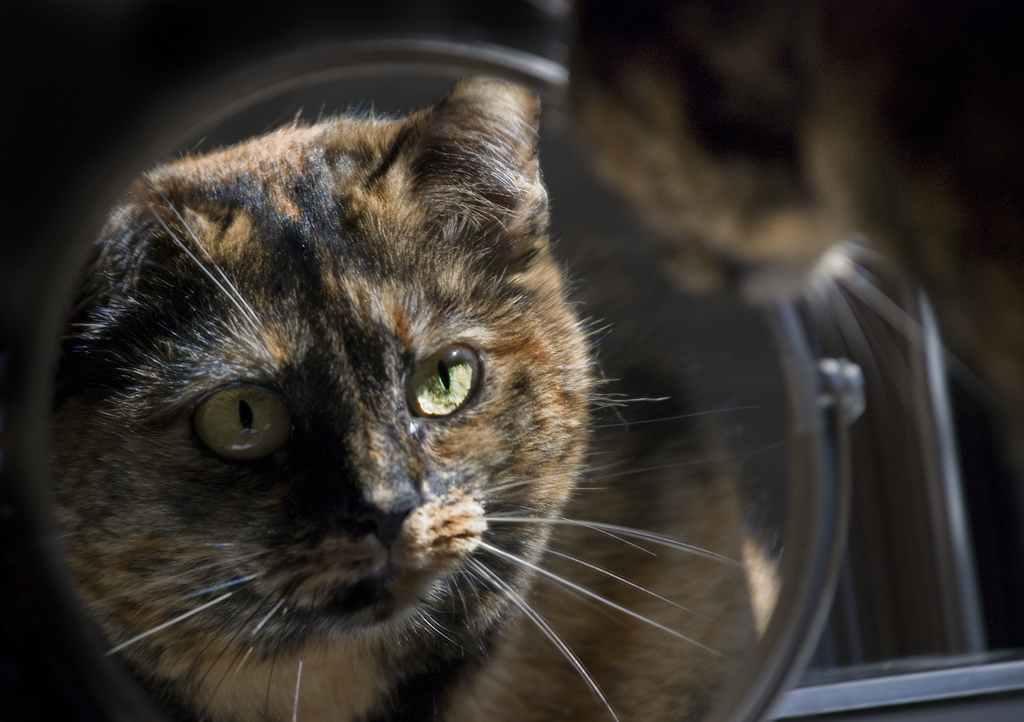 Comment nos animaux per oivent ils leur reflet dans le for Reflet dans le miroir