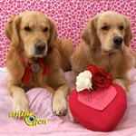 Reproduction : trouvez le ou la partenaire idéal(e) pour votre chien