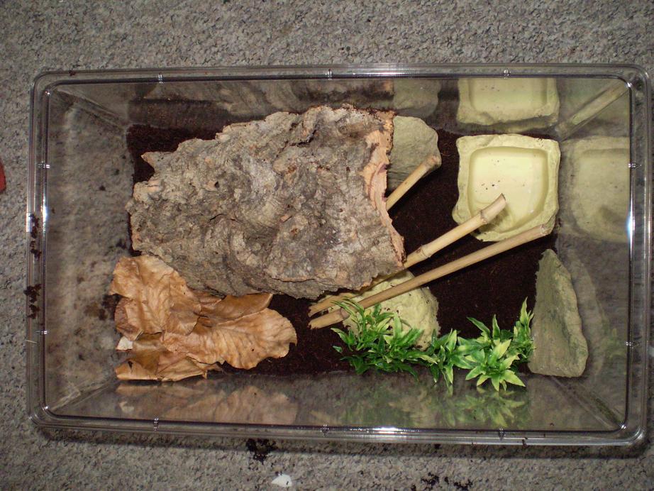 L'habitat du scorpion en captivité