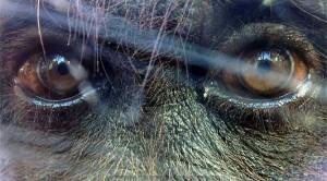 Mark Rober vient au secours des singes victimes des cameramen du dimanche !