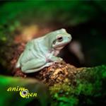 Quel type d'aménagements prévoir pour le terrarium d'une grenouille ?