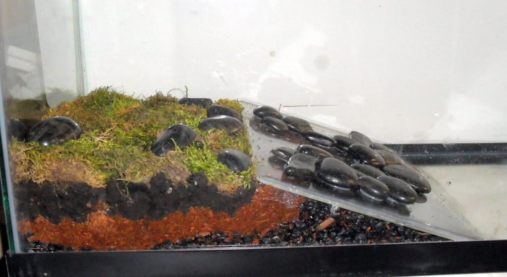 Quel type damenagements prevoir pour le terrarium dune grenouille ...