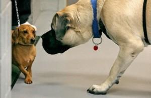 Les erreurs à éviter lorsque nous emmenons notre chien chez le vétérinaire