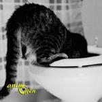 Santé : vomissement de sang chez les chats (symptômes, causes, traitement)