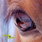 La vision chez le cheval, un livre ouvert sur son comportement