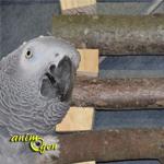 Fabrication d'un accessoire double emploi (perchoir et échelle) pour nos perroquets