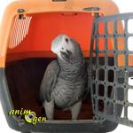 Voyager en France en avion avec son perroquet, le parcours du combattant