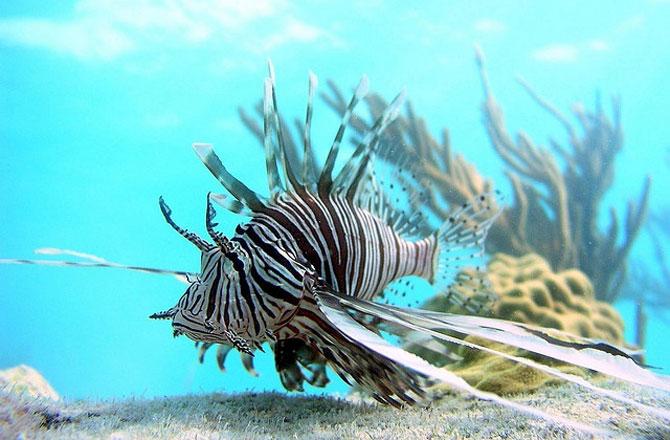 Aquariophilie : manque d'appétit, quand faut-il s'inquiéter ?