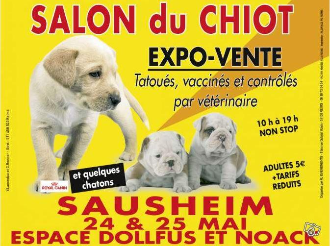 Salon du chiot sausheim 68 du samedi 24 au dimanche for Salon du chiot metz
