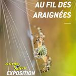 Exposition «Au fil des araignées» à Grenoble (38), du samedi 26 avril 2014 au dimanche 08 mars 2015