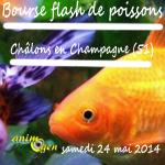 Bourse flash de poissons à Châlons en Champagne (51), le samedi 24 mai 2014