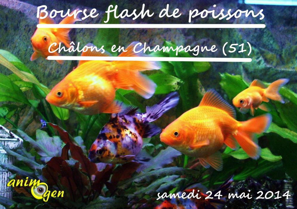 Bourse flash de poissons ch lons en champagne 51 le for Prix poisson rouge maxi zoo