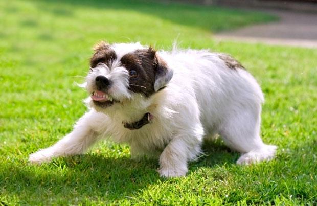 Les chiens sont ils plus agressifs pendant la période des beaux jours ?