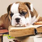 Que signifie avoir un chien au quotidien ? (Ou qu'est-ce-qu'être maître ?)