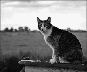 Comportement : comment aider nos chats à traverser un deuil, la perte d'un être cher ?