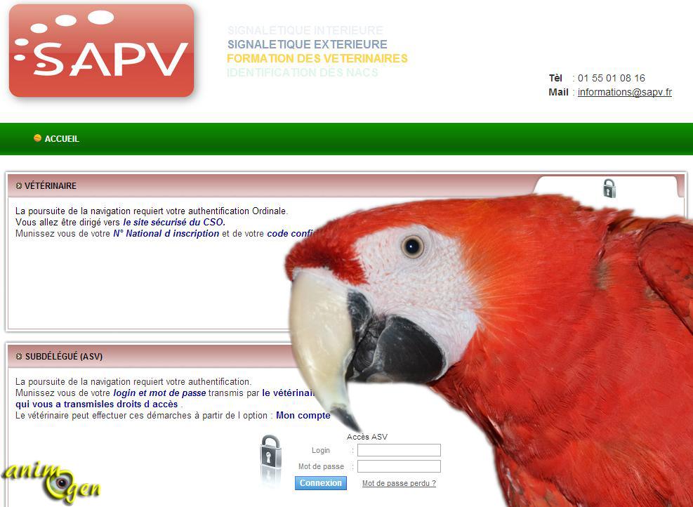 Comment inscrire votre perroquet déjà pucé au fichier central des puces électroniques ?