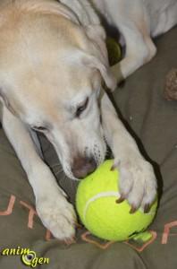 Jouet pour chien : balle de tennis géante (K.Open)