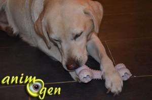 Jouet à mâcher pour chien : os en caoutchouc (Paradisio)