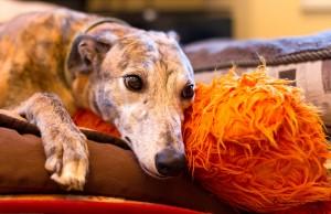 Education : peut-on laisser un chien dormir sur le lit de son maître ?