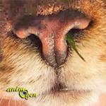 Santé : les écoulements du nez chez le chat (causes, symptômes, traitement)